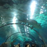 Barcelona Aquariuam